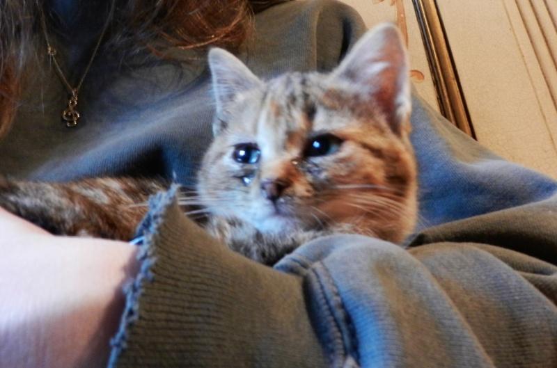 Dpt 48 - Aumont - 2 chatons femelles, tricolore et tigrée - Coryza - En soin...  Dscn4119