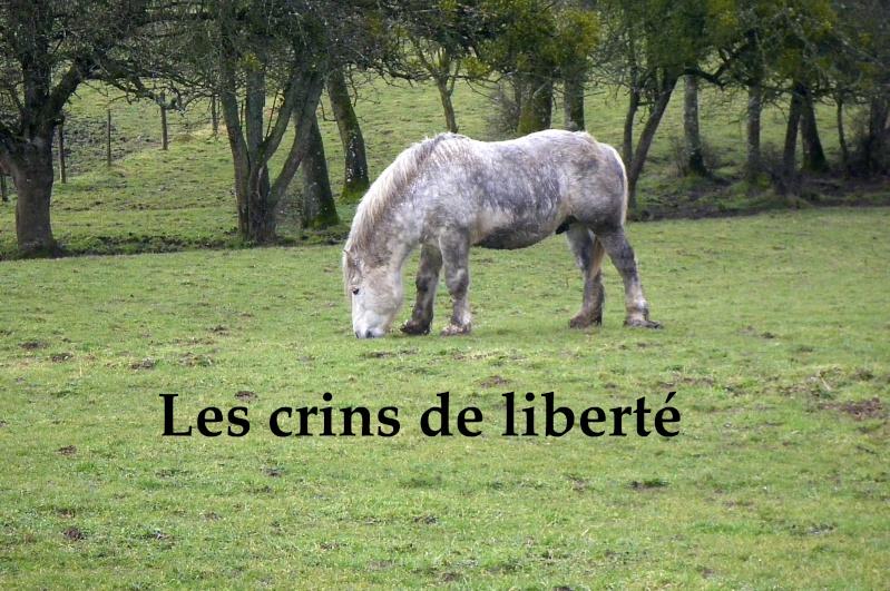 Dpt 70 - Cidjy de la Fontaine - ONC Comtoise - Sauvée par elise-et-delice (Mars 2013) - Page 2 Imgp2210