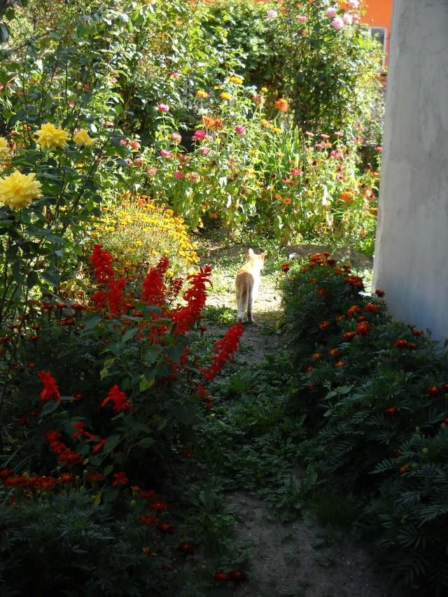 Florile din apartament Bm_47910