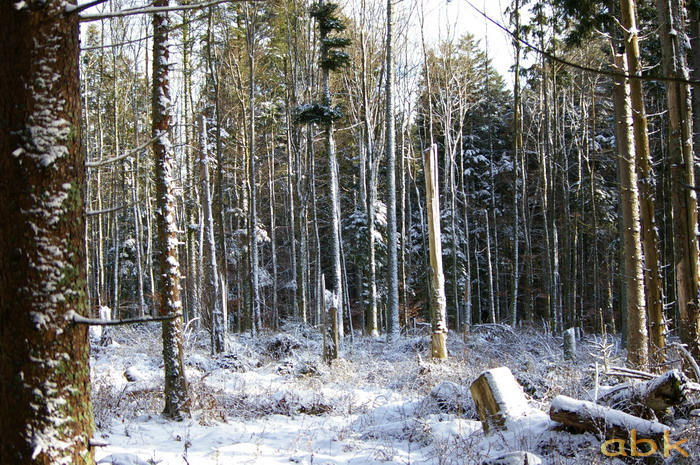 Balade dans la neige Imgp1818