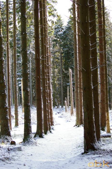 Balade dans la neige Imgp1819