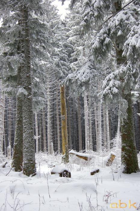 Balade dans la neige Imgp1917