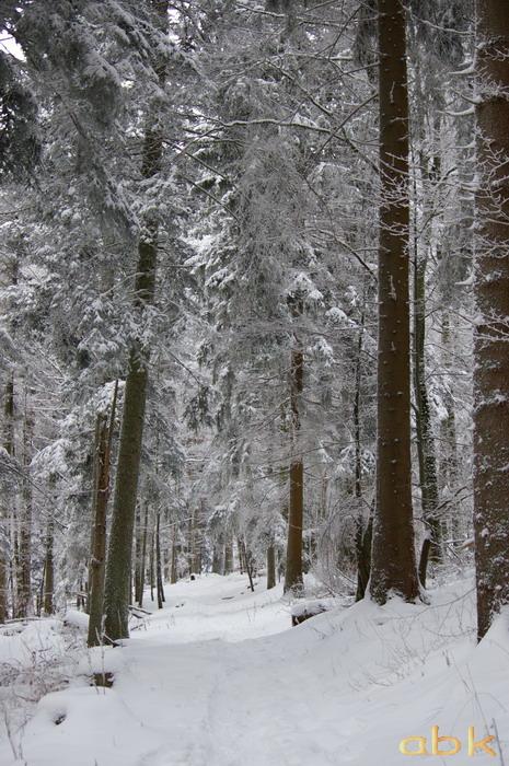 Balade dans la neige Imgp1918