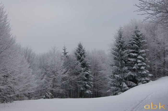 Balade dans la neige Imgp1919