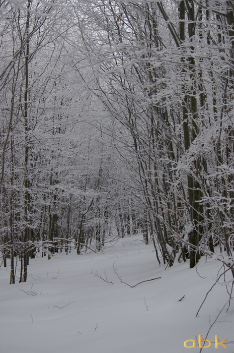 Balade dans la neige Imgp1920