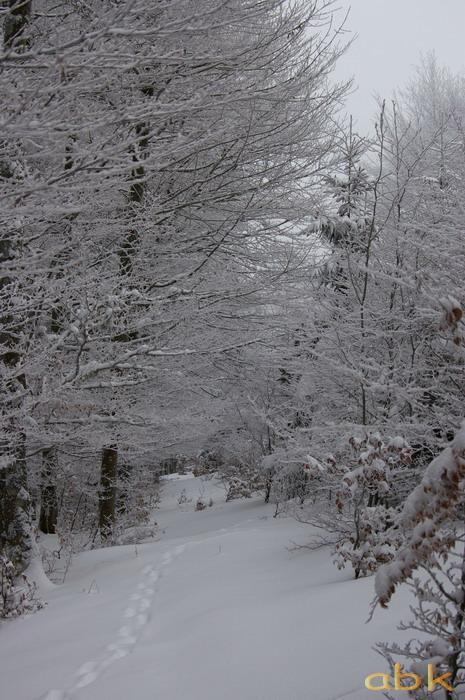 Balade dans la neige Imgp1921