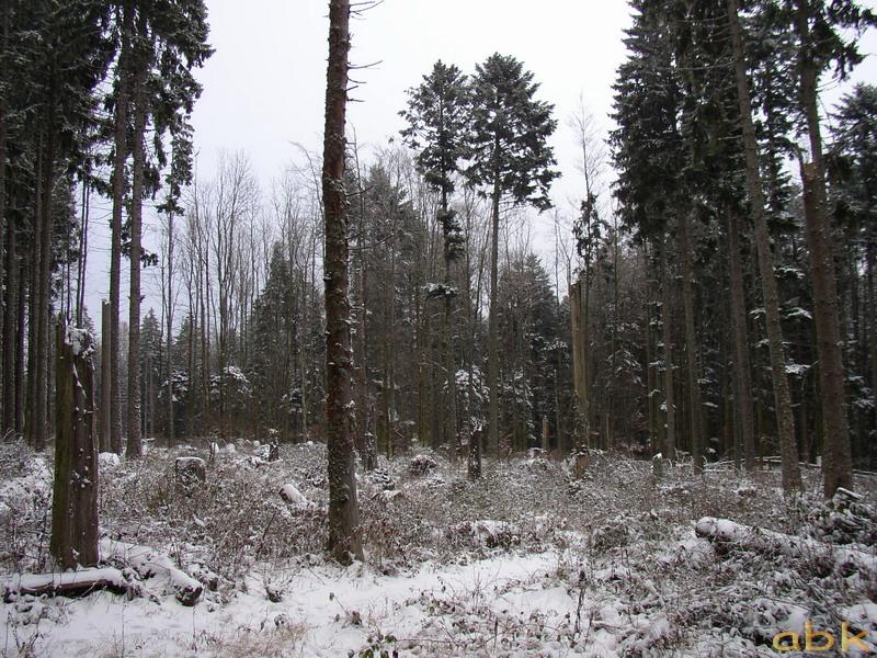 Première neige sur un versant du champ du feu Pc130012