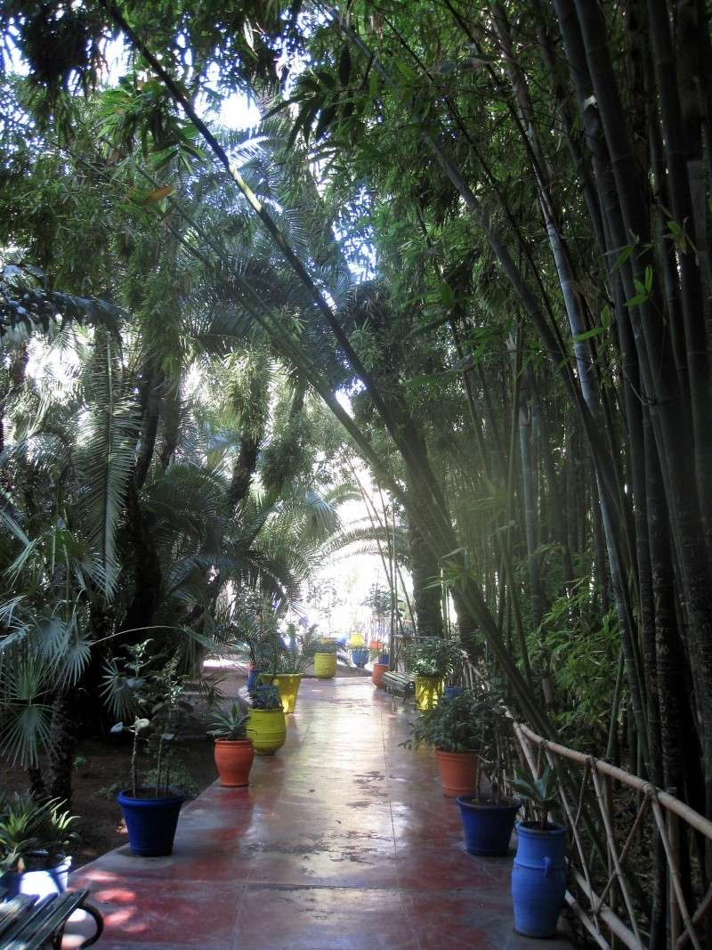 Le jardin Majorelle, Marrakech Img_4817