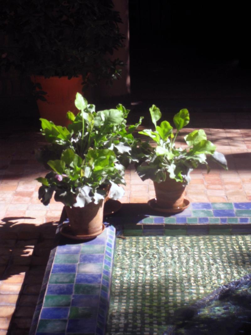 Le jardin Majorelle, Marrakech Img_4818