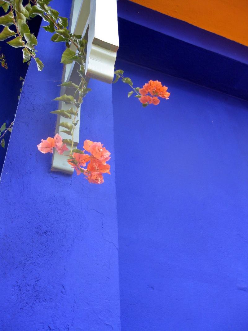 Le jardin Majorelle, Marrakech Img_4911