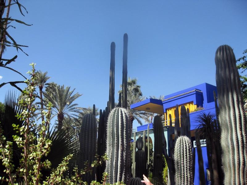 Le jardin Majorelle, Marrakech Img_4914