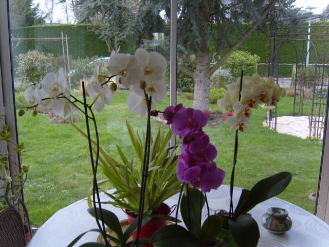 ET MAINTENANT JE FAIS QUOI ? - Page 2 Orchid10
