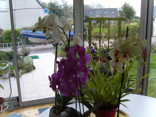 ET MAINTENANT JE FAIS QUOI ? - Page 2 Orchid11
