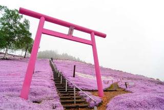 بالصور: شاهدوا المنتزه الوردي في اليابان 1114