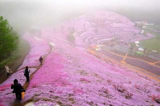 بالصور: شاهدوا المنتزه الوردي في اليابان 1215