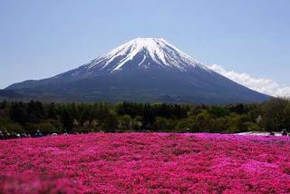 بالصور: شاهدوا المنتزه الوردي في اليابان 122
