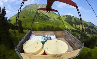 صور رائعة لكيفية صنع الجبنة السويسرية! 1511