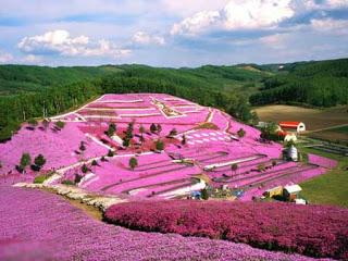 بالصور: شاهدوا المنتزه الوردي في اليابان 1613