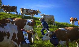 صور رائعة لكيفية صنع الجبنة السويسرية! 214