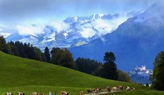 صور رائعة لكيفية صنع الجبنة السويسرية! 316