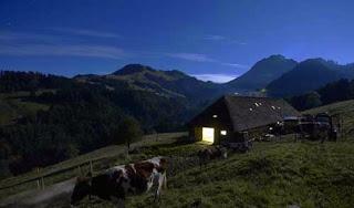 صور رائعة لكيفية صنع الجبنة السويسرية! 414