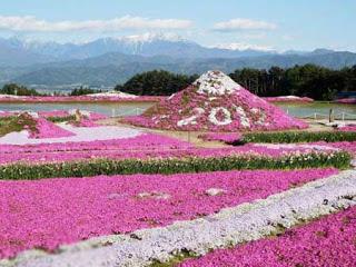 بالصور: شاهدوا المنتزه الوردي في اليابان 814