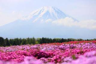 بالصور: شاهدوا المنتزه الوردي في اليابان 914