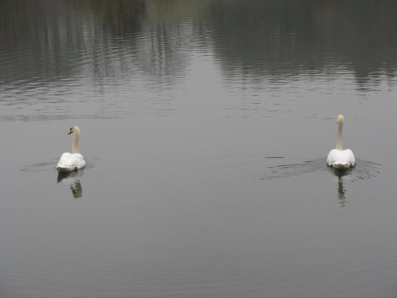 journée pêche dans les Vosges(88) Img_0616