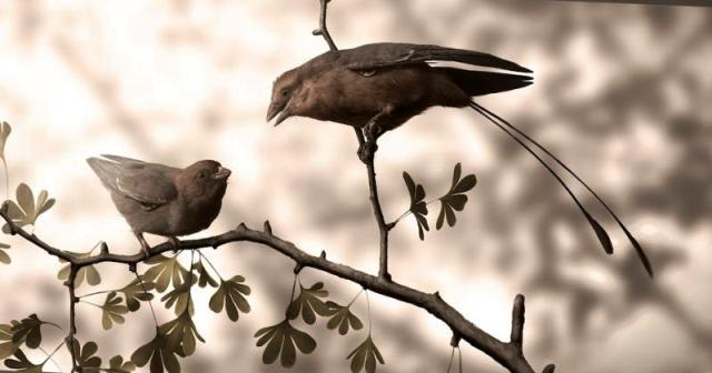 Quand un dinosaure atteint-il sa maturité sexuelle ? Un oiseau répond Par Delphine Bossy Rtemag84