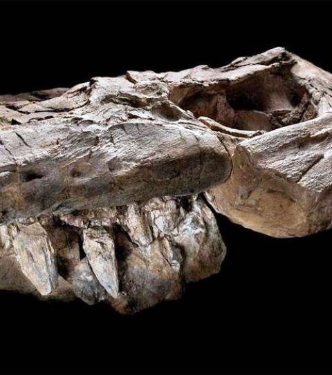 Thalattoarchon saurophagis, un monstre marin qui hantait les océans il y a 245 millions d'années Thalat10