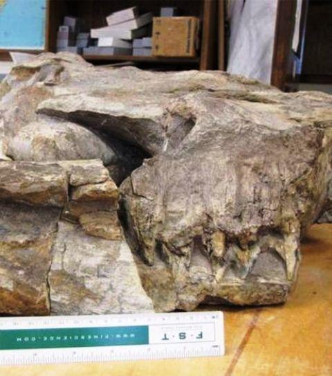 Thalattoarchon saurophagis, un monstre marin qui hantait les océans il y a 245 millions d'années Thalat13