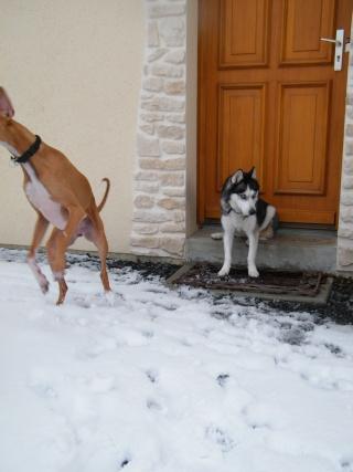 les 4 pattes dans la neige !!! 23010