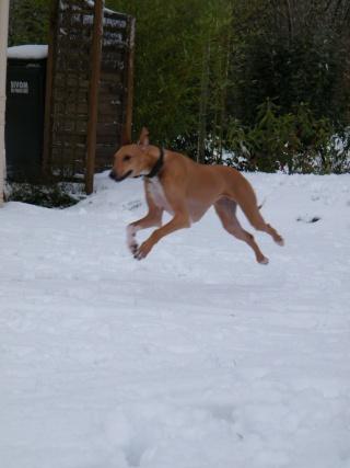les 4 pattes dans la neige !!! 23910