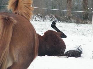 les 4 pattes dans la neige !!! 29110