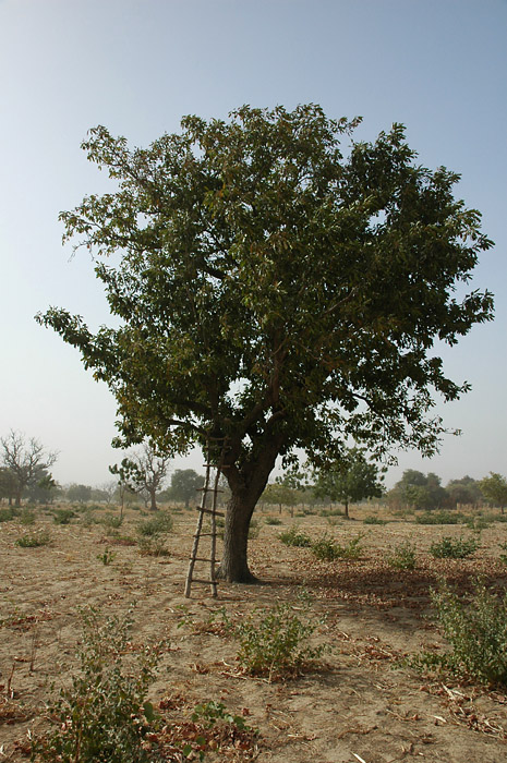 au près de mon arbre .. Dsc_1110