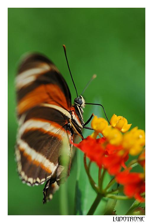 fil à papillon - Page 2 Dsc_5210