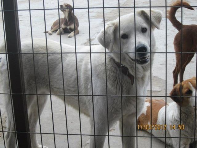 70 chiens à sauver avant le 20 janvier! Maya1010