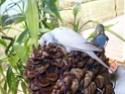 JEUX et LIEUX FAVORIS de nos oiseaux 100_2210