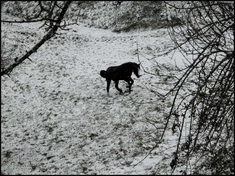 Les juments et l'hiver..... Bella10