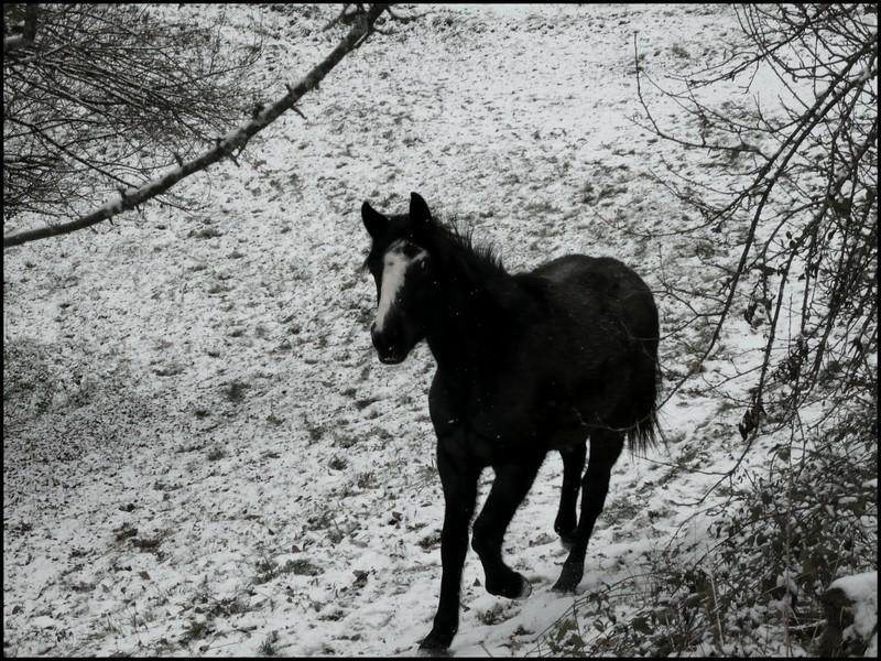 Les juments et l'hiver..... Bella110