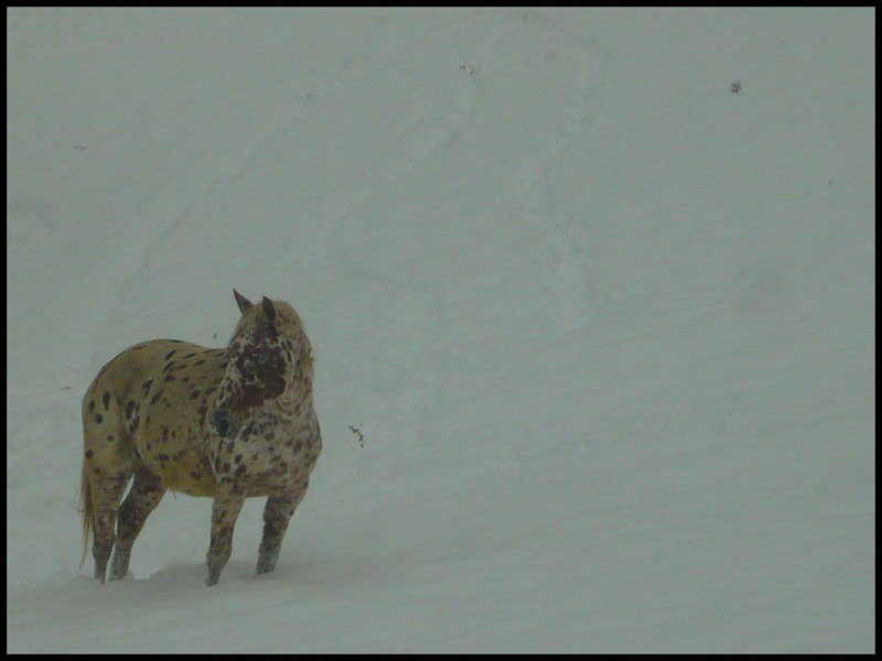 Les juments et l'hiver..... - Page 2 Cheval10