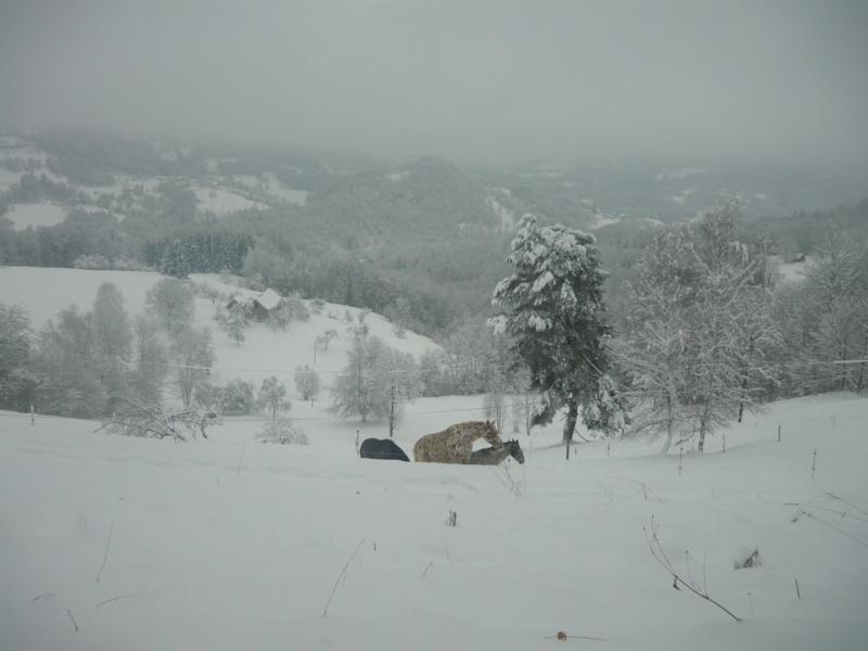 Les juments et l'hiver..... - Page 2 Chevau10