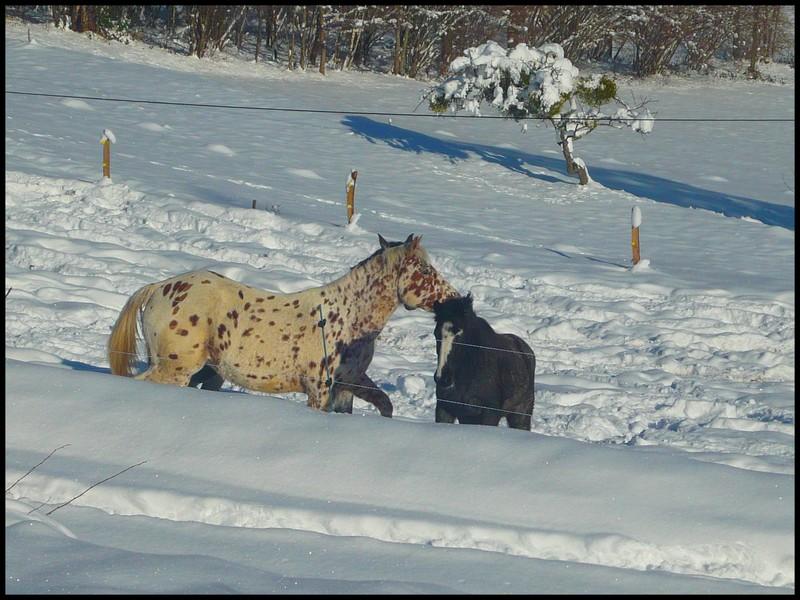 Les juments et l'hiver..... - Page 2 Juju10