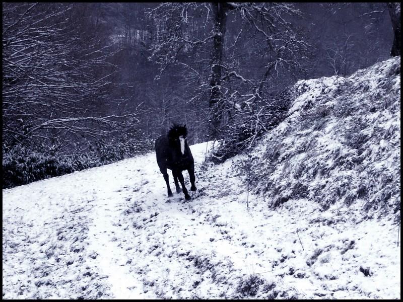 Les juments et l'hiver..... Little11