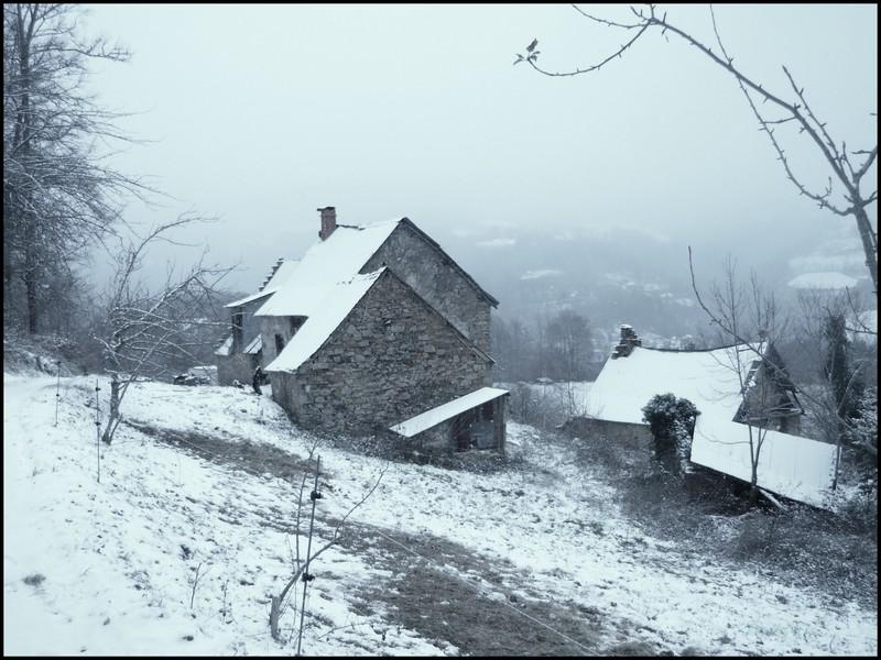 Les juments et l'hiver..... Maison10