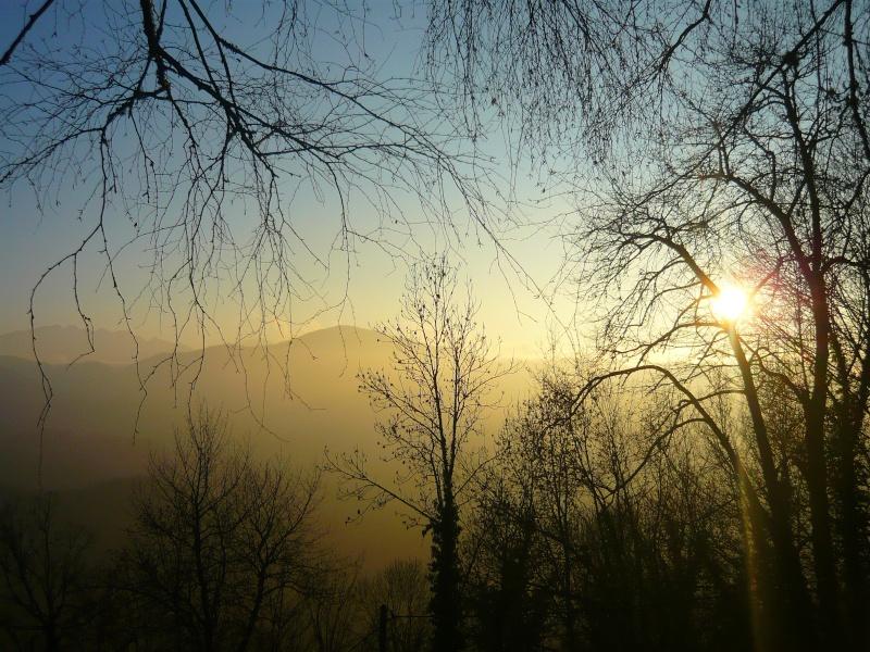 Les juments et l'hiver..... Soleil10