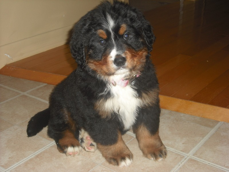 voici ma belle chienne Maggie Maggie10