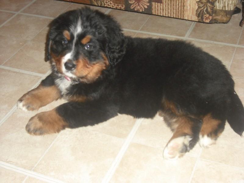 voici ma belle chienne Maggie Maggie11