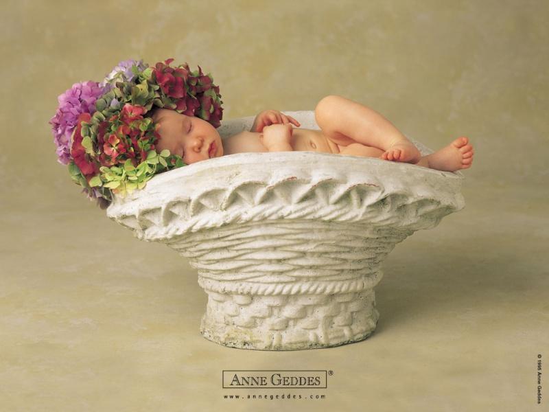 Chùm ảnh bé và hoa - Anne Geddes 04310
