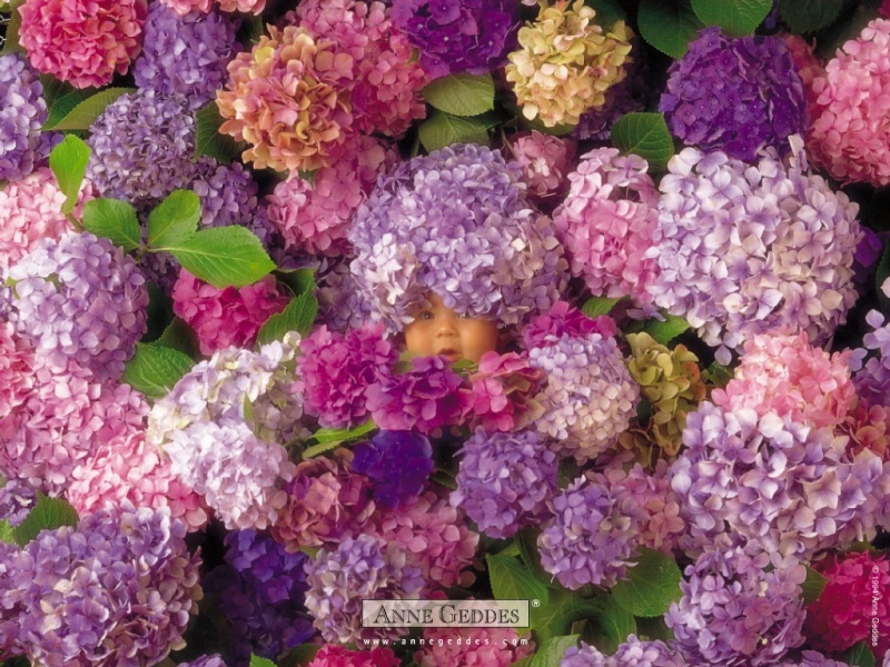 Chùm ảnh bé và hoa - Anne Geddes 09310